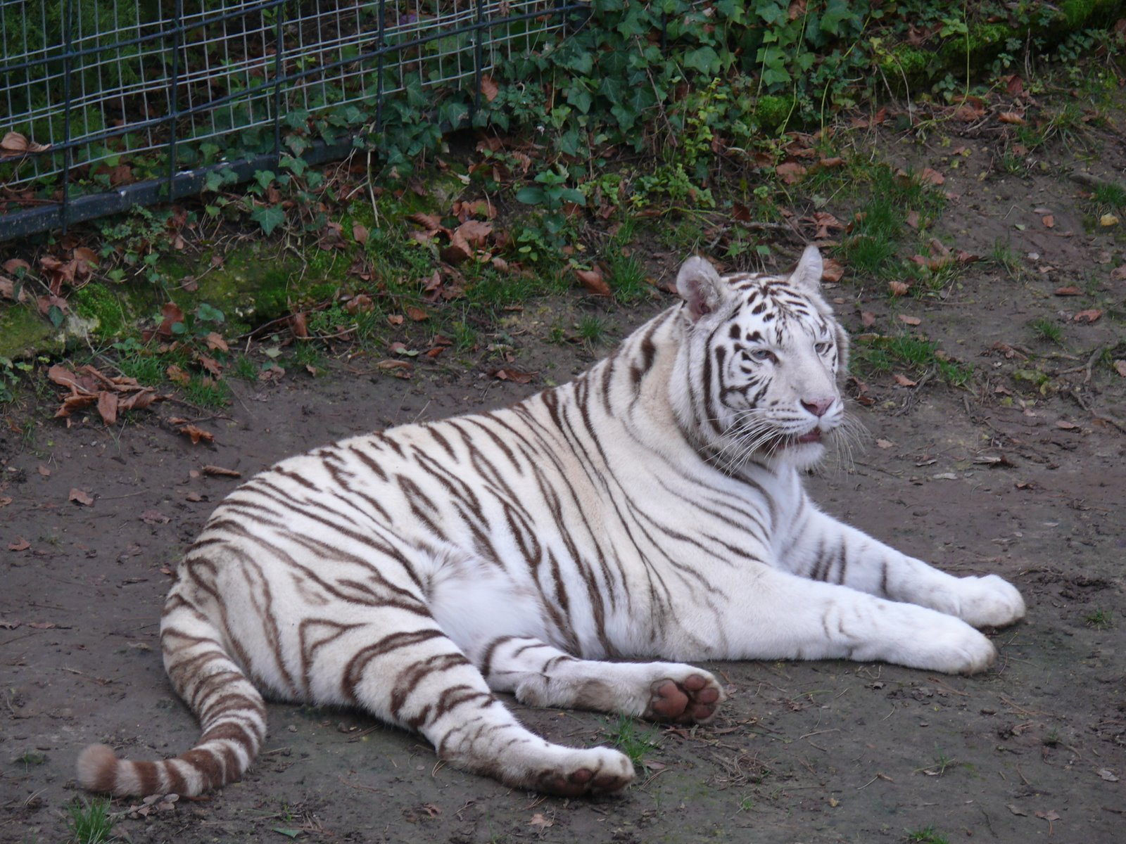 Le zoo de beauval for Appart hotel zoo de beauval